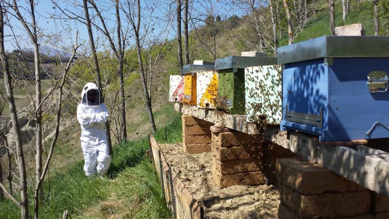 Come ho realizzato il mio primo apiario
