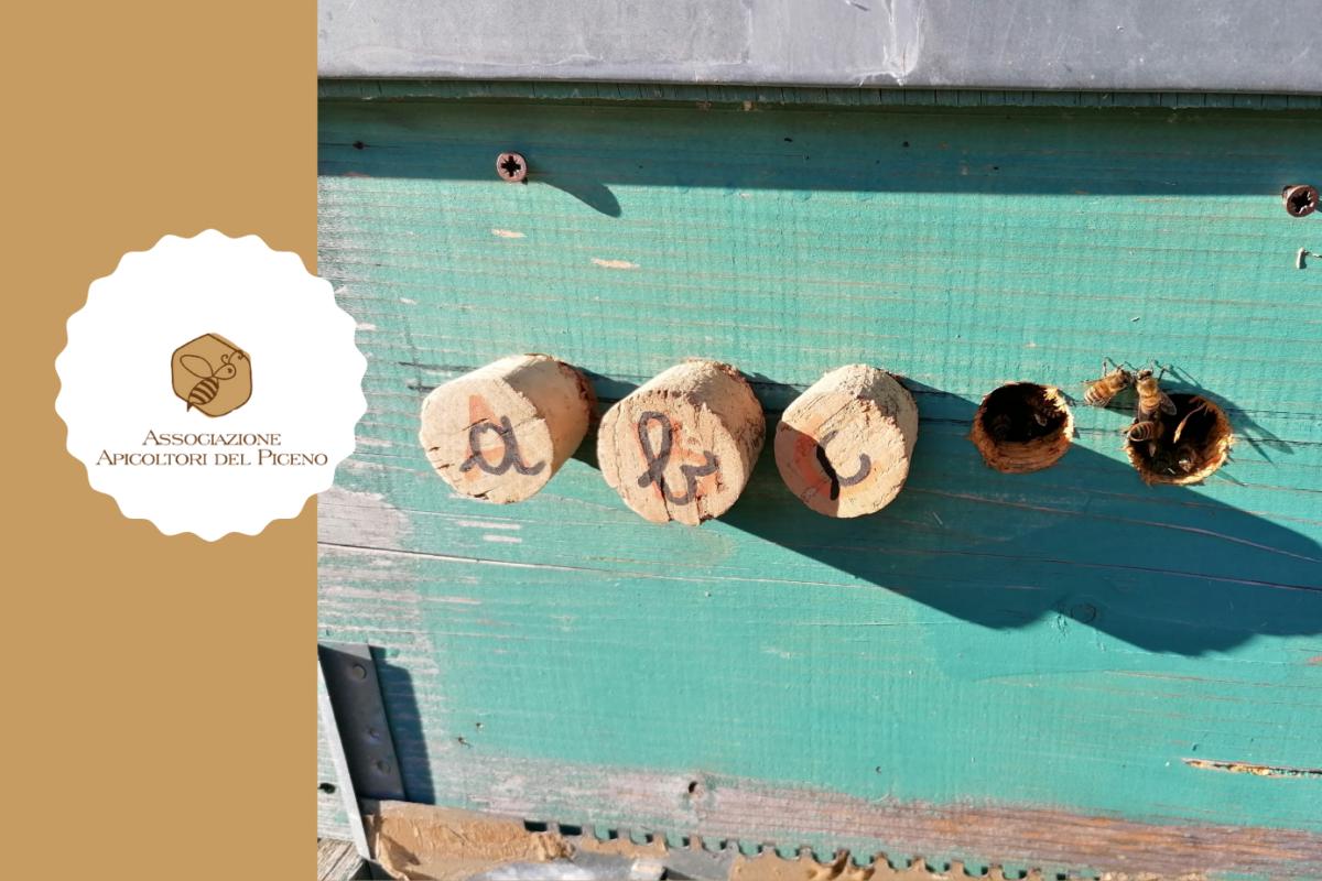 ABC: Apicoltura per chi Ben Comincia – Pratica in apiario